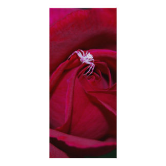 Loving the red rose and meaning personalized rack card