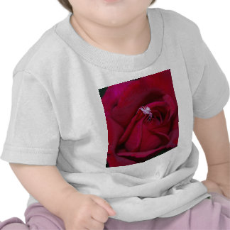 Loving the red rose and meaning tee shirt