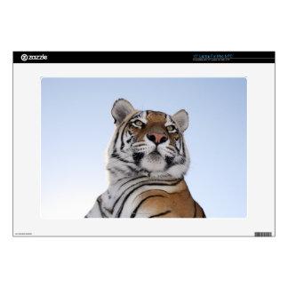 "Low angle view of a Tiger (Panthera tigris) 15"" Laptop Decals"