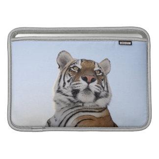 Low angle view of a Tiger (Panthera tigris) MacBook Air Sleeve