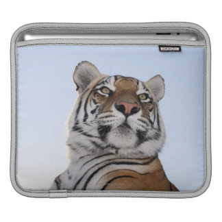 Low angle view of a Tiger (Panthera tigris) Sleeve For iPads