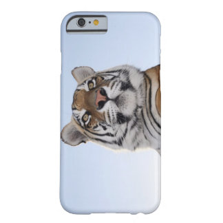Low angle view of a Tiger (Panthera tigris) with Barely There iPhone 6 Case