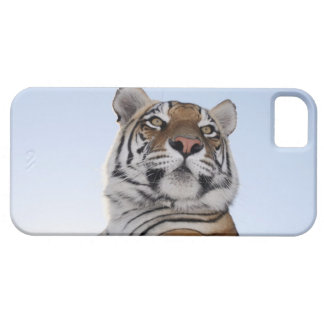 Low angle view of a Tiger (Panthera tigris) with iPhone SE/5/5s Case