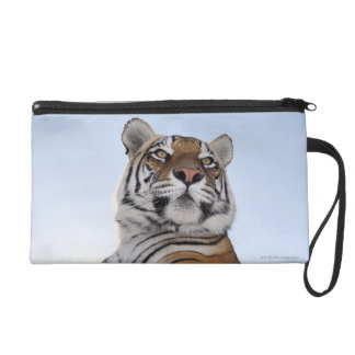 Low angle view of a Tiger (Panthera tigris) Wristlet Purse