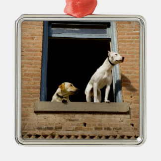 Low angle view of dogs in open window of brick metal ornament