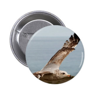 Low flying bird pinback buttons