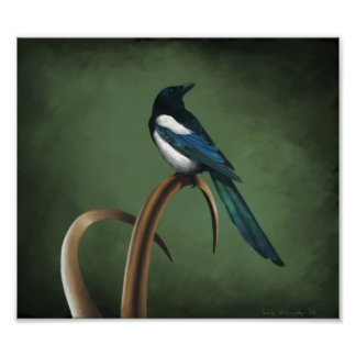 Low-key Magpie Print