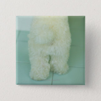 Low section view of a miniature poodle pinback button