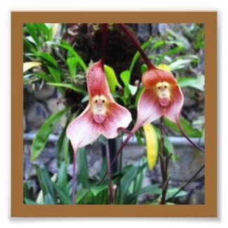 LowCost DECORATIONS on KODAK Paper : Monkey Flower Photo Print