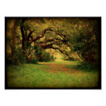 Lowcountry Live Oak Poster