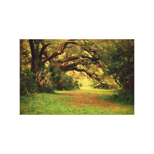 Lowcountry Oaks Canvas Print