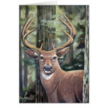 Lowell's Deer Cards