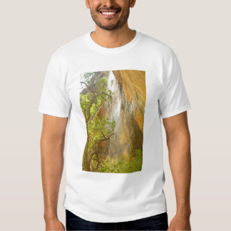 Lower Emerald Pool Waterfall Red rock and Tree Shirts