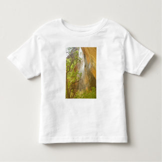 Lower Emerald Pool Waterfall Red rock and Tree Tshirts