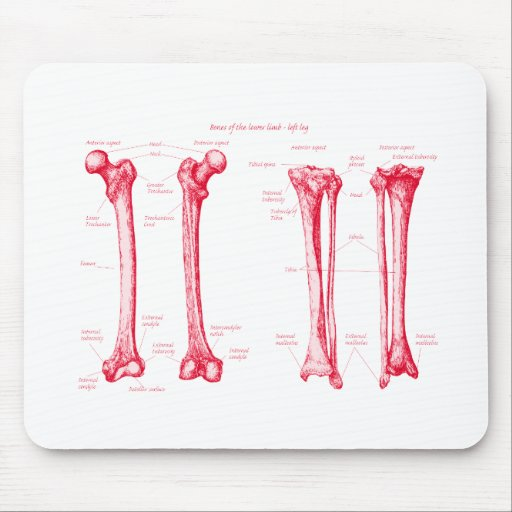 Lower Limb Red Mouse Pads