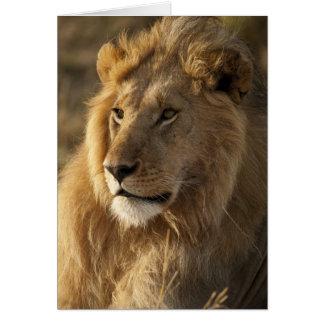 Lower Mara in the Masai Mara Game Reserve, Card