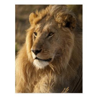 Lower Mara in the Masai Mara Game Reserve, Postcard