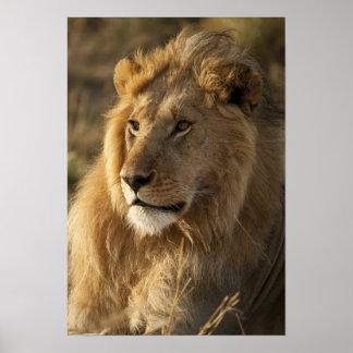 Lower Mara in the Masai Mara Game Reserve, Poster