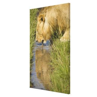 Lower Mara, Masai Mara Game Reserve, Kenya, Canvas Print