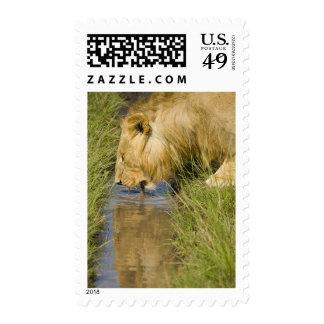 Lower Mara Masai Mara Game Reserve Kenya Stamp