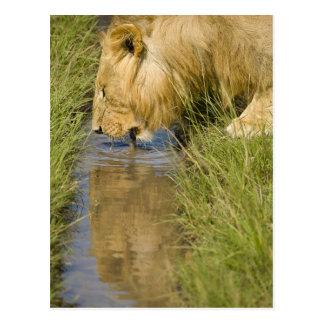 Lower Mara, Masai Mara Game Reserve, Kenya, Postcard