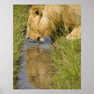 Lower Mara, Masai Mara Game Reserve, Kenya, Print