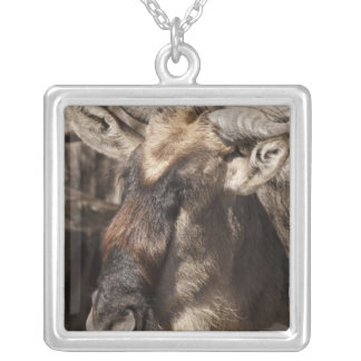 Lower Mara, Masai Mara Game Reserve, Silver Plated Necklace