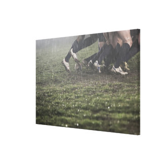 Lower section of rugby player in scrum, pushing canvas print