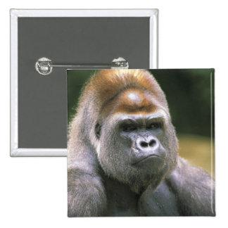 Lowland gorilla. Gorilla Gorilla. Pinback Buttons