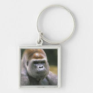 Lowland gorilla. Gorilla Gorilla. Keychain