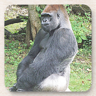 Lowland Gorilla in Sitting Pose Beverage Coaster