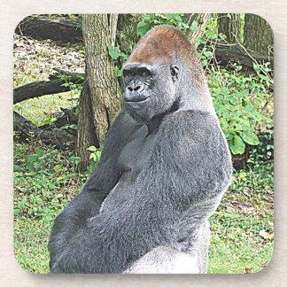Lowland Gorilla in Sitting Pose Drink Coaster
