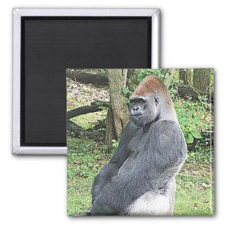 Lowland Gorilla in Sitting Pose Magnet