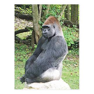 Lowland Gorilla in Sitting Pose Postcard