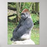 Lowland Gorilla in Sitting Pose Poster