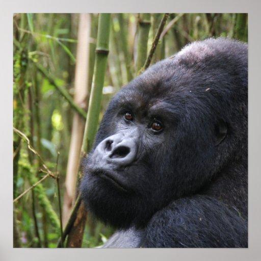 Lowland Gorilla Invitations Poster
