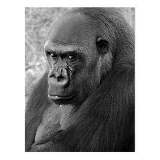 Lowland Gorilla Postcards