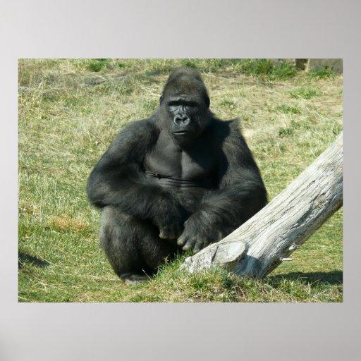 Lowland Gorilla Posters