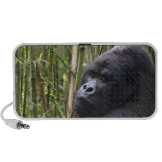 Lowland Gorilla Speakers