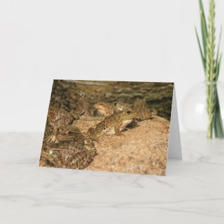 Lowland Leopard Frogs, Note Card