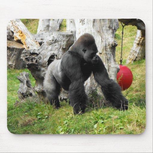 Lowland silverback gorilla walking mouse pad
