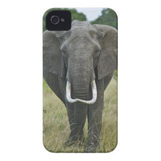 Loxodonta de Elephantna del africano, juego de Mar Case-Mate iPhone 4 Protectores