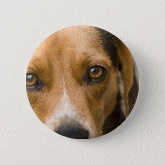 Loyal Beagle Hound Hunting Dog Button