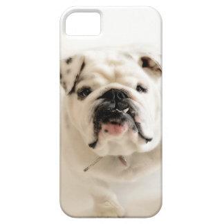 Loyal White Bulldog Photograph iPhone SE/5/5s Case