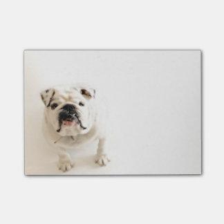 Loyal White Bulldog Photograph Post-it® Notes