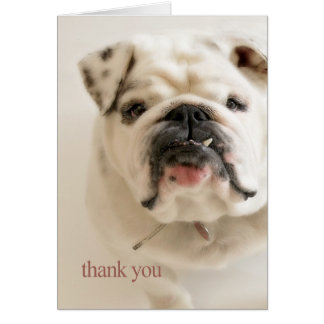 Loyal White Bulldog Thank You Card