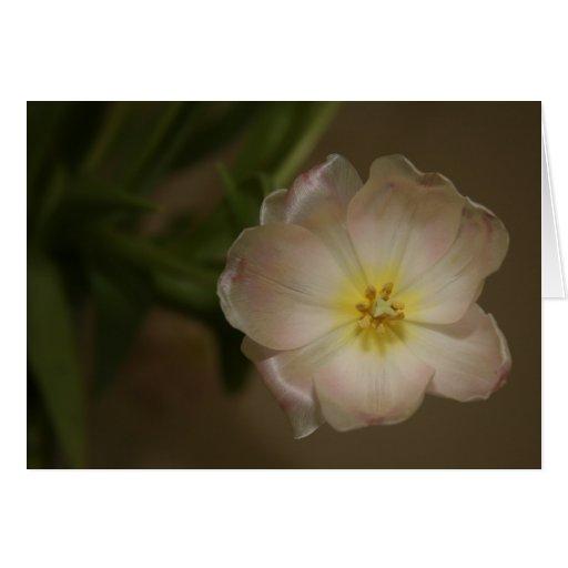 Lt Pink Card Blank del tulipán Tarjetón
