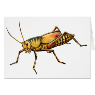 Lubber Grasshopper Greeting Card