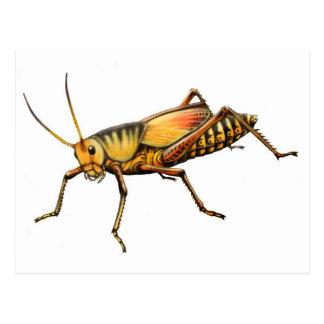 Lubber Grasshopper Postcard