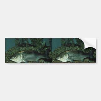 Lubina rayada etiqueta de parachoque